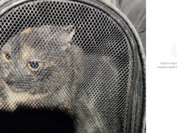 Ночью в Мурино волонтеры спасли кошку из вентиляции заброшенного здания